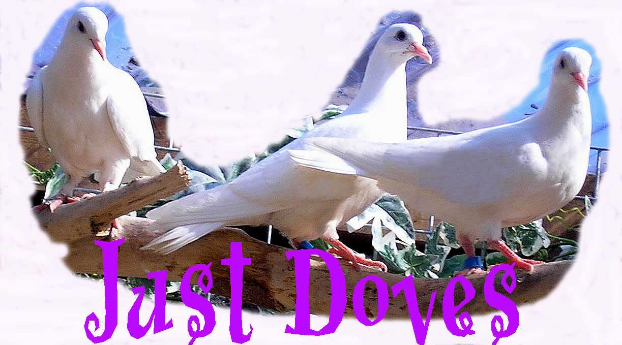 Just Doves Logo